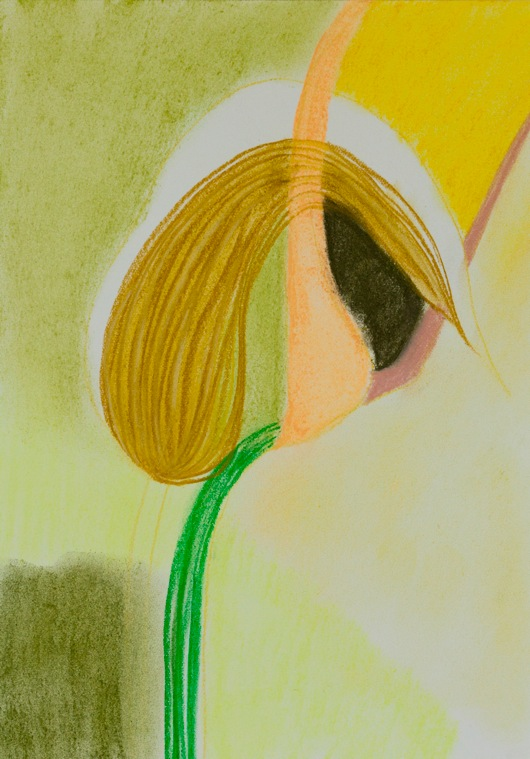 Suzanne Day-Pterostylis Banksii 1